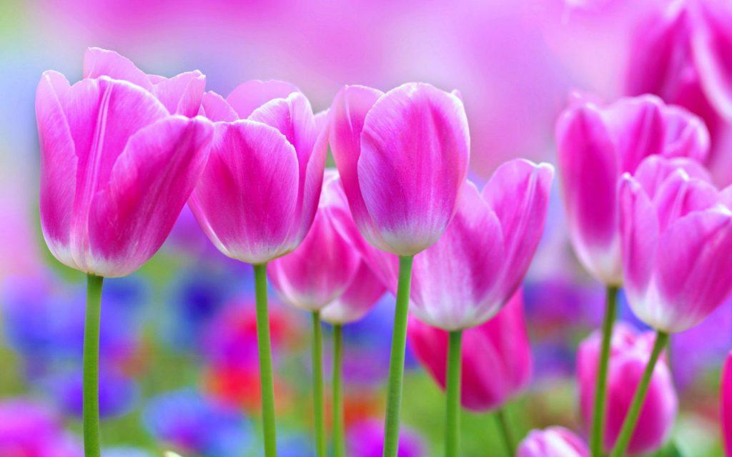 beautiful-flower-wallpaper-22